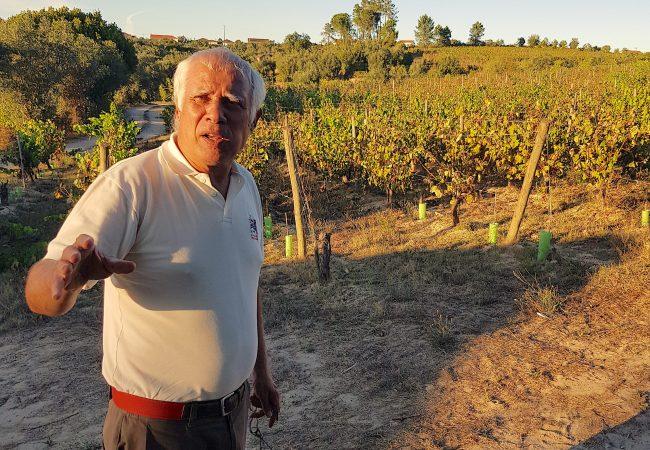 José vigneron du dao dans la quinta do perdigao