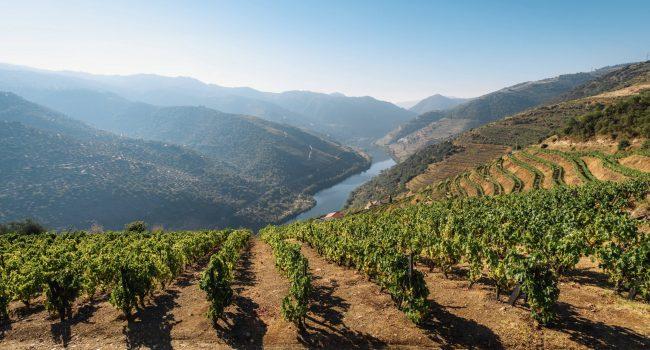 La vallée du Douro une étape incontournable pendant un road trip au Portugal